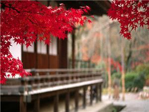 شمار گردشگران در ژاپن از مرز 10 میلیون نفر گذشت