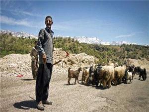 استقرار گروههای دامپزشکی در مسیر کوچ عشایر