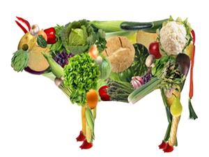 غذاهای سالم برای گیاهخواران