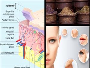 گیاهانی شگفت انگیز که برای سلامتی پوست مفید هستند
