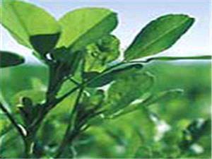 داروی گیاهی ضد جوش صورت و بدن