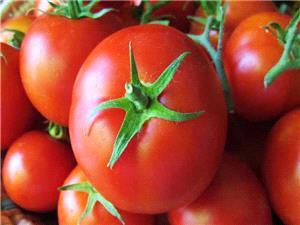 گوجه فرنگي قاچاق به مقصد نرسيد