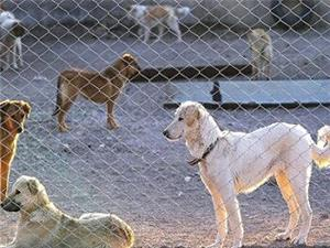 اجرای عملیات زنده گیری سگهای ولگرد