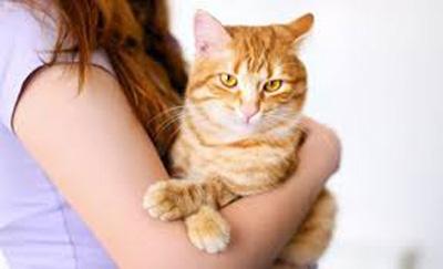 بيماري گربه,نشانه هاي بيماري گربه,عوارض بيماري گربه