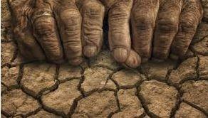 هيچکس خسارت کشاورزان خوزستاني را نميدهد            خشکسالي و دروغ!