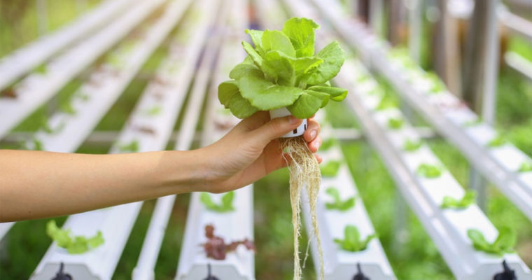 تکنولوژي جديد ژاپني در خدمت کاشت ميوه و سبزي بدون خاک