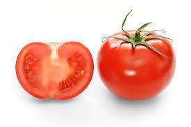 آغاز برداشت محصول گوجه فرنگي در نيشابور