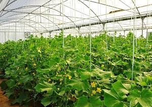 افزايش 48 هزار هکتاری مساحت گلخانه های کشور