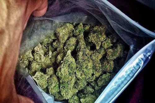 450 کيلوگرم ماده مخدر «گُل» در بوکان کشف شد