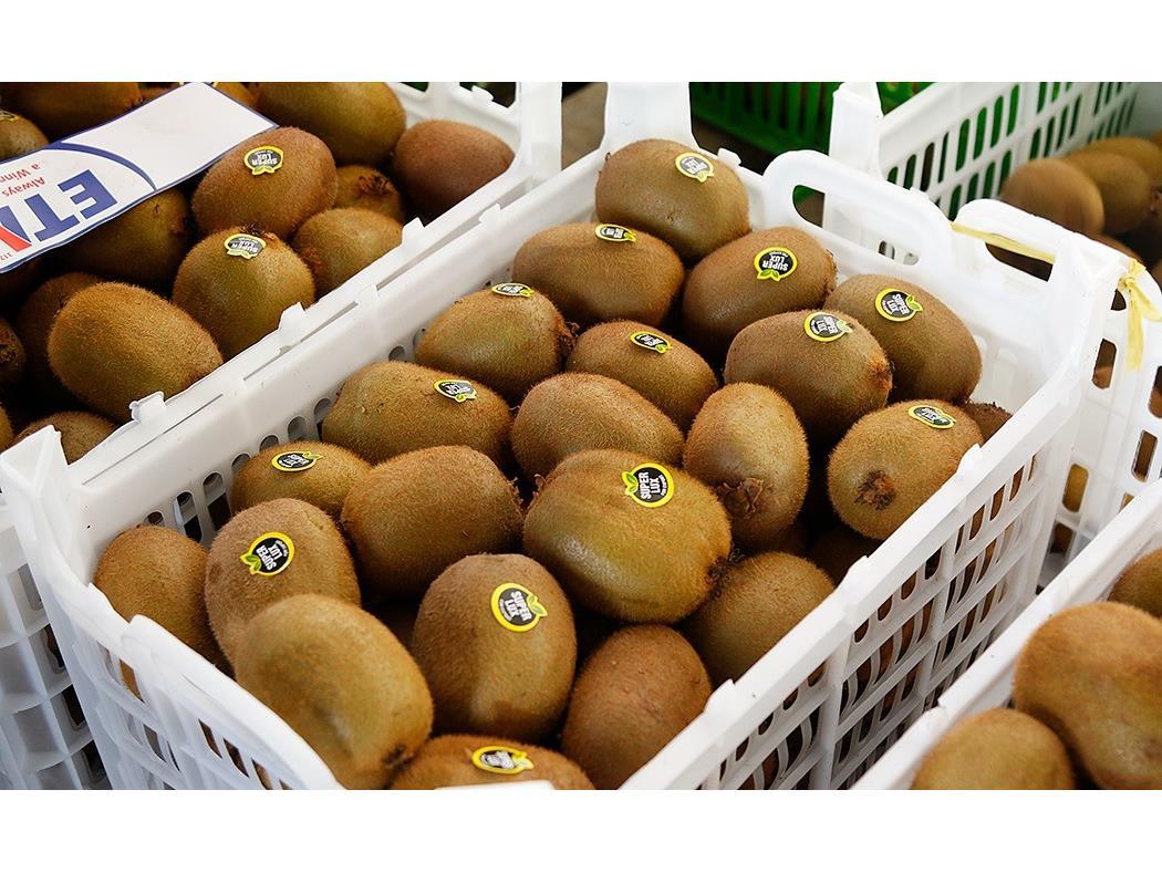 صادرات 3000 تن کيوي از نوشهر به خارج از کشور