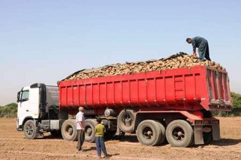 Image result for چغندر قند خوزستان به دلیل کمبود کامیون